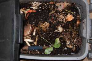 Leftovers, a trowel, worms, castings