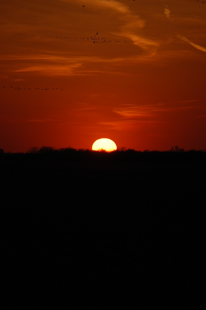 Sunset and the Sandhill Cranes fly into the night.