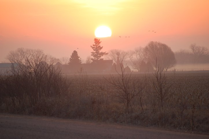 Sunrise and sandhill cranes