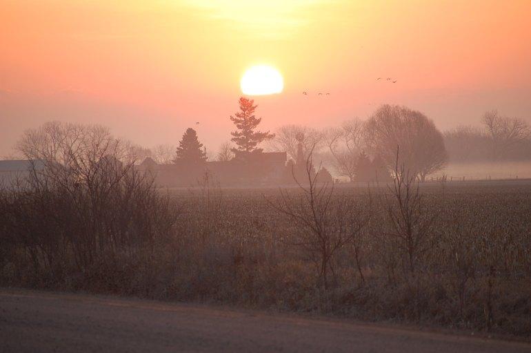 Sunrise and sandhill cranes