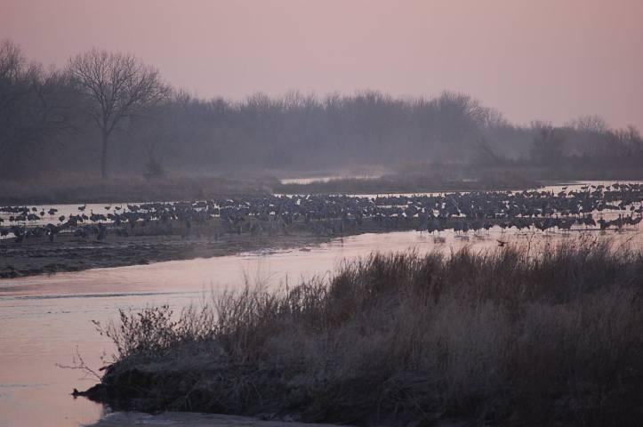Cranes on the Platte River.