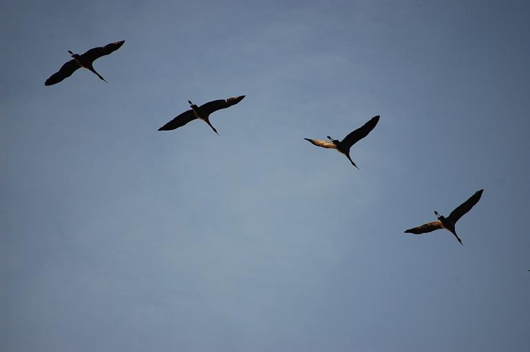 Cranes overhead.