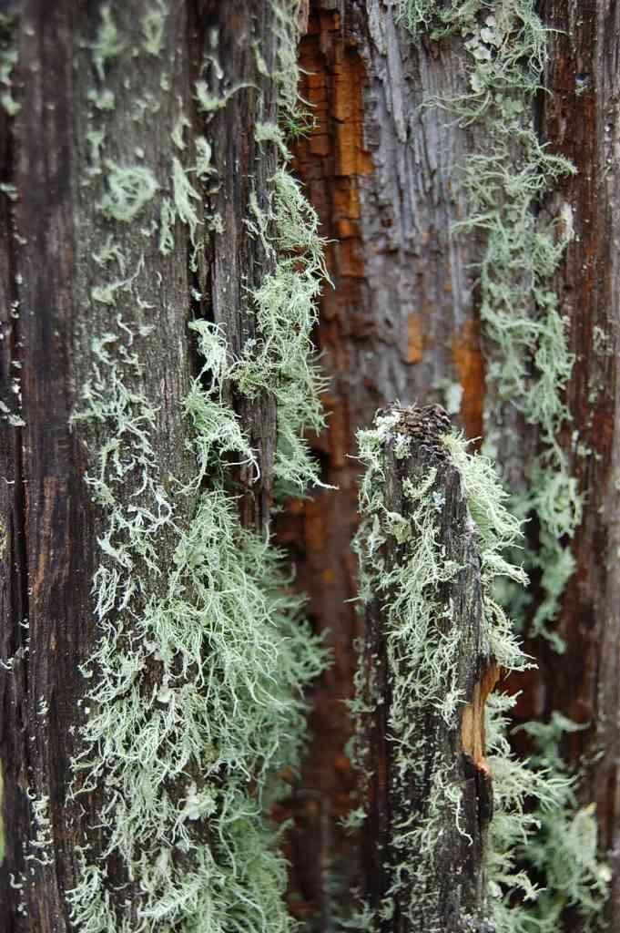 Likin' the lichen.